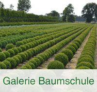Kategorienbild-Galerie-Baumschule